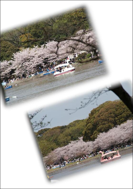 お花見5.JPG